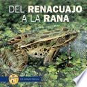 Libro de Del Renacuajo A La Rana